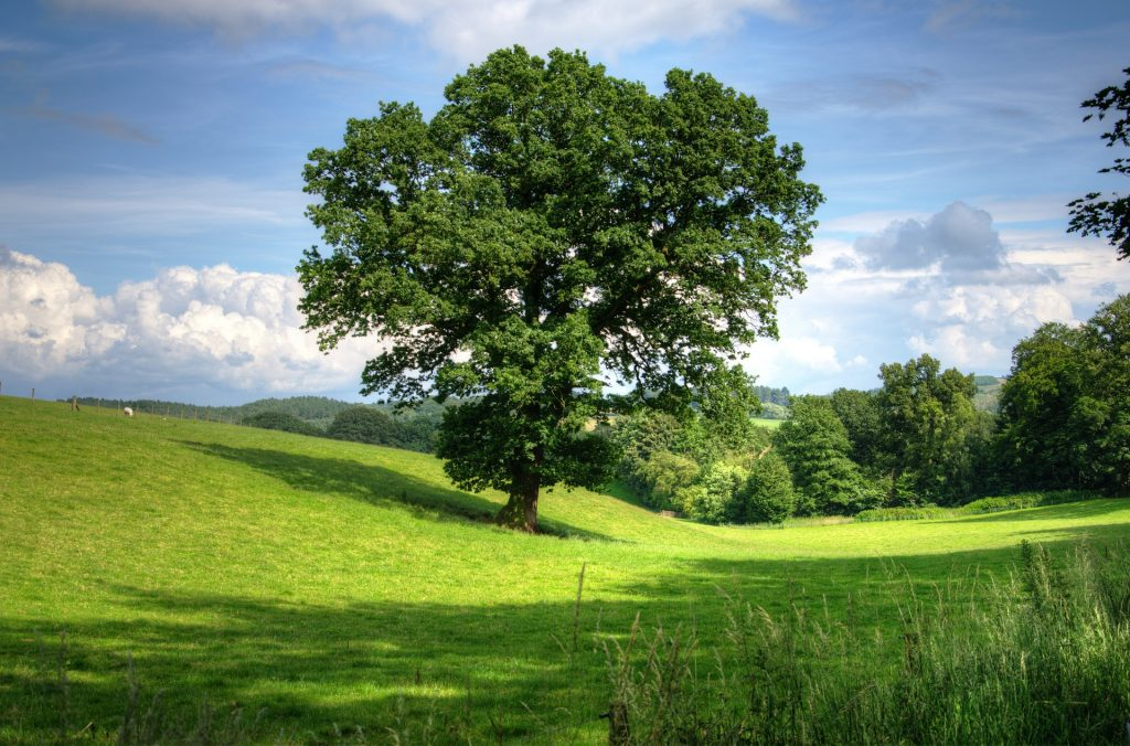 tree-402953_1920